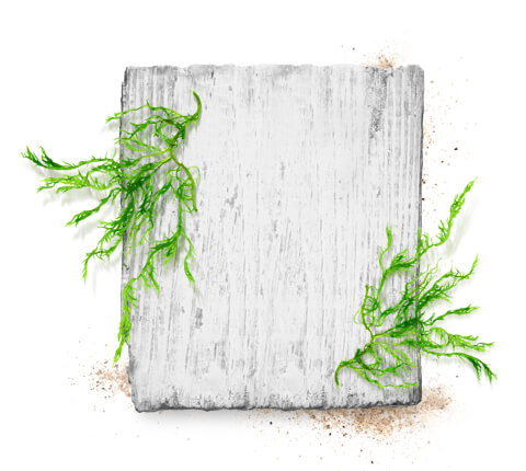 barnangen_com_swedish_inspired_ingredients_kelp_480x430